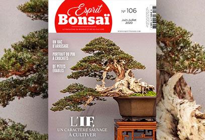 Esprit Bonsaï n°106 Juin-Juillet 2020 L'IF, un caractère sauvage à cultiver