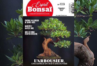 Esprit Bonsaï n°109 Décembre 2020 - Janvier 2021 - L'Arbousier une espèce du sud à découvrir